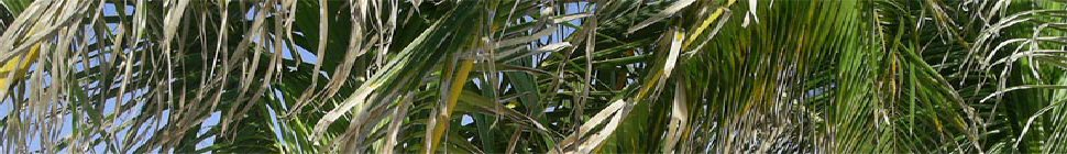 Webcam / Chat Sites header image 3